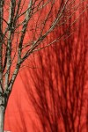 Red Shadows: D Shayne